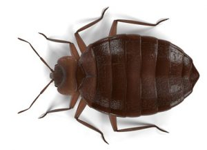 Bed Bugs - Perfection Pest Management - Indianola, Iowa