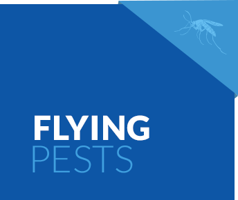 Flying Pest Services