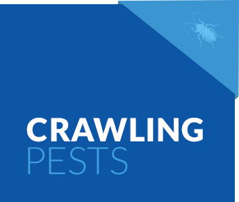 Crawling Pest Services